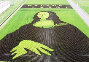 آثارهنری در مزرعههای برنج ژاپن